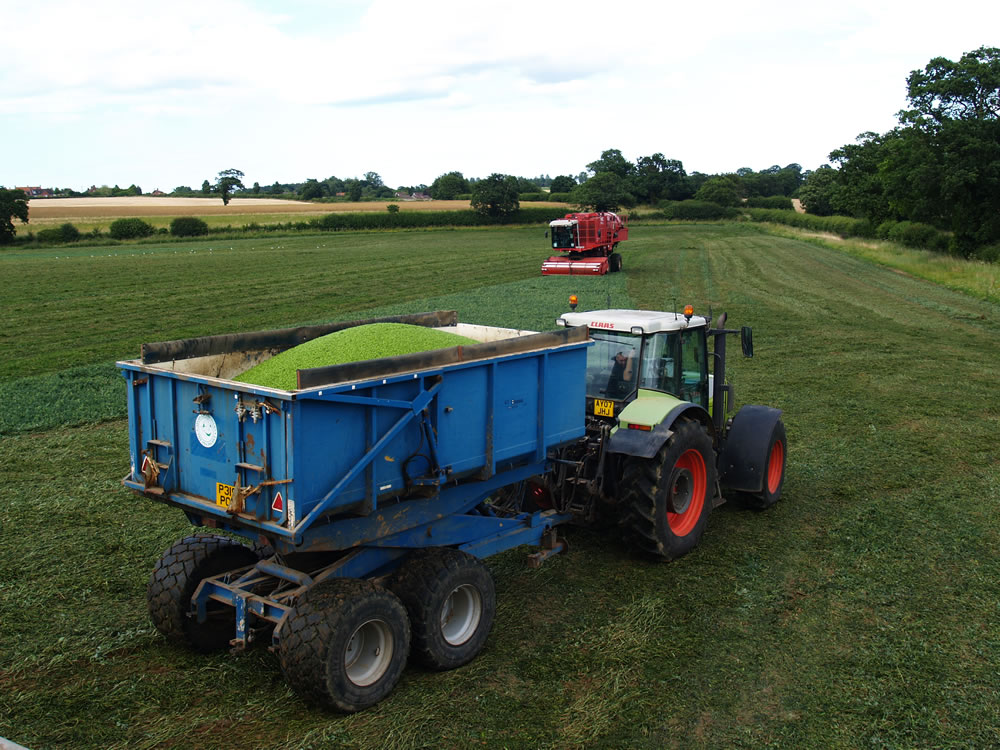 The tractor driver activates the trailer's hydraulic system to lift the peas to the height of the lorry's tank