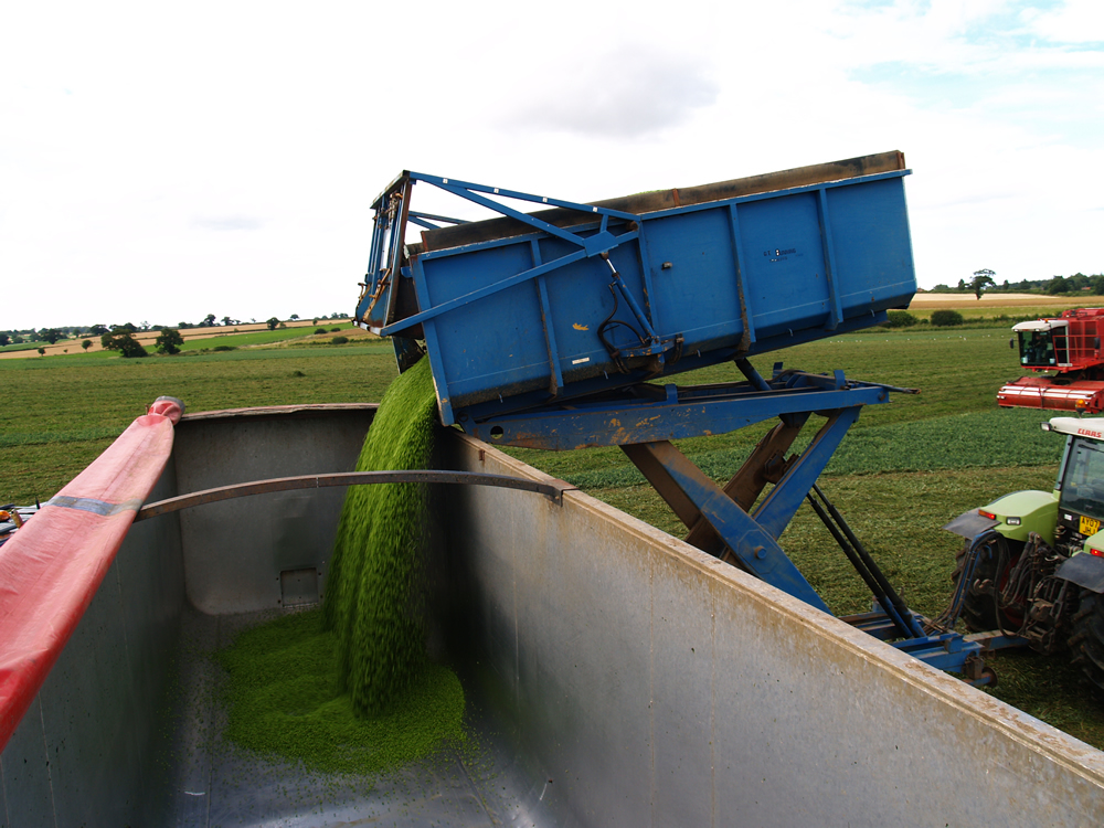Some of our peas are harvested and frozen within 150 minutes of picking to ensure quality and freshness